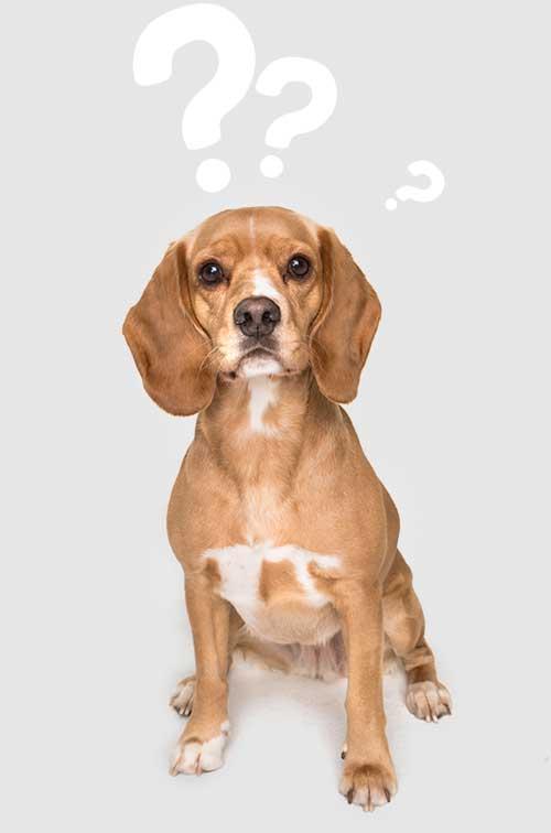 Firmenhund Cleo bei der Umzugsplanung